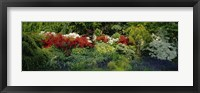 Framed High Angle View Of Flowers In A Garden, Baltimore, Maryland, USA