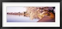 Framed Tidal Basin, Washington DC, District Of Columbia, USA