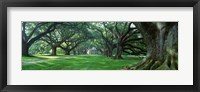 Framed USA, Louisiana, New Orleans, Oak Alley Plantation, plantation home through alley of oak trees