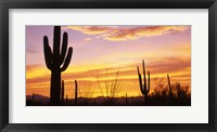 Framed Sunset Saguaro Cactus Saguaro National Park AZ
