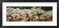 Framed Flowers in a garden, Sherwood Gardens, Baltimore, Maryland, USA