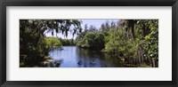Framed River passing through a forest, Hillsborough River, Lettuce Lake Park, Tampa, Hillsborough County, Florida, USA
