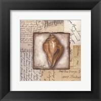 Framed Conch Shell