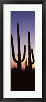 Framed Saguaro cacti, Saguaro National Park, Tucson, Arizona, USA