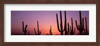 Framed Purple Sky Behind Cacti in the Saguaro National Park, Arizona