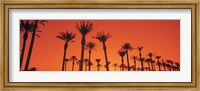 Framed Silhouette of date palm trees in a row, Phoenix, Arizona, USA