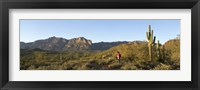 Framed Hiker standing on a hill, Phoenix, Arizona, USA