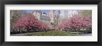 Framed Cherry Trees, Battery Park, NYC, New York City, New York State, USA