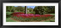 Framed Azalea and Tulip Flowers in a park, Sherwood Gardens, Baltimore, Maryland, USA