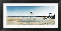 Framed Palm tree sprinkler on the beach, Coney Island, Brooklyn, New York City, New York State, USA