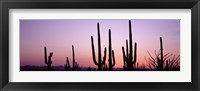 Framed Landscape of Saguaro National Park, Tucson, Arizona