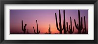 Framed Purple Sky Behind Cacti in the Saguaro National Park, Arizona