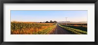 Framed Road Along Rural Cornfield, Illinois, USA
