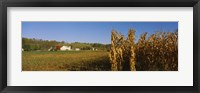Framed Corn in a field after harvest, along SR19, Ohio, USA