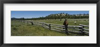 Framed Two horses in a field, Arizona, USA