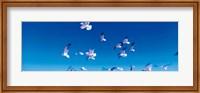 Framed Birds in flight Flagler Beach FL USA
