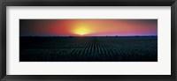 Framed Corn field at sunrise Sacramento Co CA USA