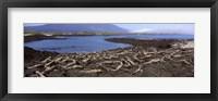 Framed Marine iguanas (Amblyrhynchus cristatus) at a coast, Fernandina Island, Galapagos Islands, Ecuador