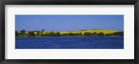 Framed Lake in front of a rape field, Holstein, Schleswig-Holstein, Germany