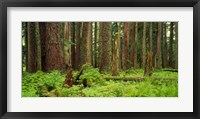Framed Forest floor Olympic National Park WA USA
