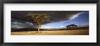 Framed Tree w\storm clouds Tanzania