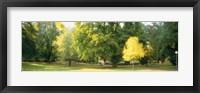 Framed Trees in a park, Wiesbaden, Rhine River, Germany