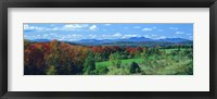 Framed Autumn Trees VT