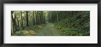 Framed Trees In A National Park, Shenandoah National Park, Virginia, USA