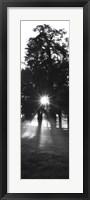 Framed Sunrise, Fog, Woodford Co, Kentucky, USA