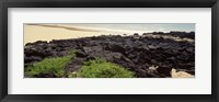 Framed Lava rocks at a coast, Floreana Island, Galapagos Islands, Ecuador