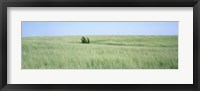 Framed Grass on a field, Prairie Grass, Iowa, USA
