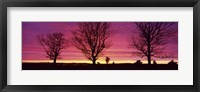 Framed Oak Trees, Sunset, Sweden