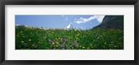 Framed Wild Flowers, Matterhorn Switzerland