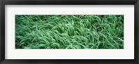 Framed High angle view of grass, Montana, USA