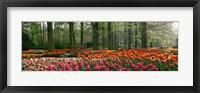 Framed Keukenhof Garden, Lisse, The Netherlands