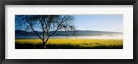 Framed Fog over crops in a field, Napa Valley, California, USA