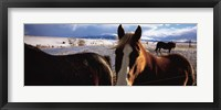 Framed Horses in a field, Montana, USA