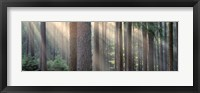 Framed Sunlight shining through trees in a forest, South Bohemia, Czech Republic