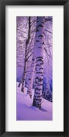 Framed Birch trees at the frozen riverside, Vuoksi River, Imatra, Finland
