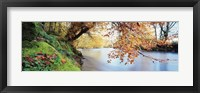 Framed Trees along a river, River Dart, Bickleigh, Mid Devon, Devon, England