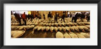 Framed Tuna auction at a fish market, Tsukiji Fish Market, Chuo Ward, Tsukiji, Tokyo Prefecture, Kanto Region, Honshu, Japan