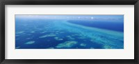 Framed Coral reef in the sea, Belize Barrier Reef, Ambergris Caye, Caribbean Sea, Belize