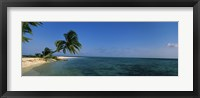 Framed Palm tree overhanging on the beach, Laughing Bird Caye, Victoria Channel, Belize