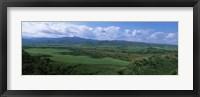 Framed High angle view of sugar cane fields, Cienfuegos, Cienfuegos Province, Cuba