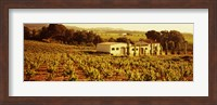 Framed Farmhouses in a vineyard, Penedes, Catalonia, Spain