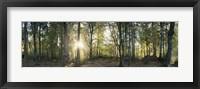 Framed Trees in a forest, Black Forest, Freiburg im Breisgau, Baden-Wurttemberg, Germany