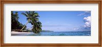 Framed Palm trees on the beach, Indonesia