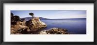 Framed Cypress tree at the coast, The Lone Cypress, 17 mile Drive, Carmel, California