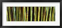 Framed Bamboo trees in a botanical garden, Kanapaha Botanical Gardens, Gainesville, Alachua County, Florida