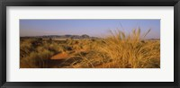 Framed Grass growing in a desert, Namib Rand Nature Reserve, Namib Desert, Namibia